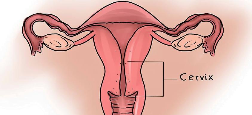 cuello del útero o cérvix